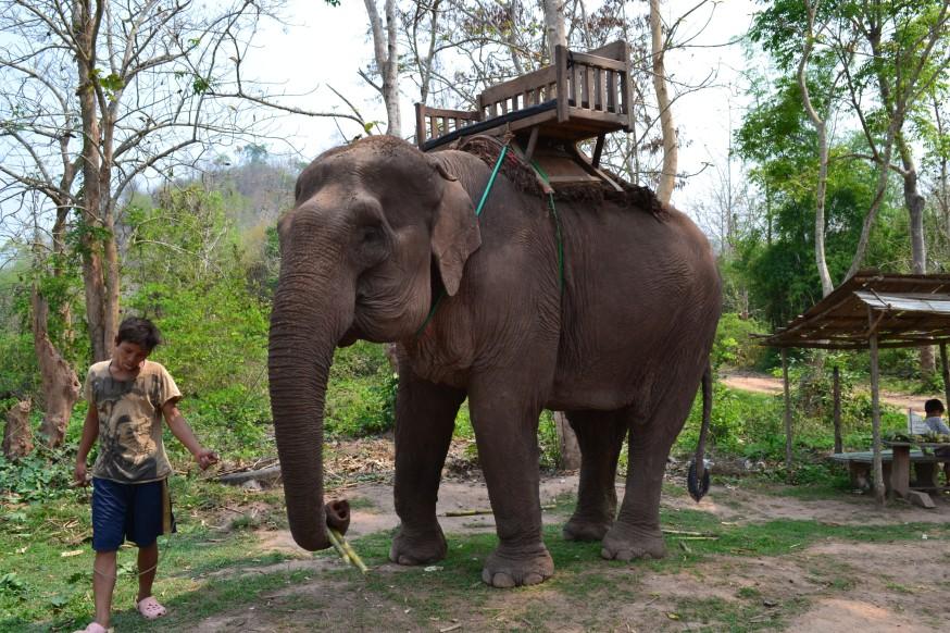 91101c09bc To ťahanie za ucho nám príde voči slonovi trochu kruté a Ivke sa tiež  nepáči